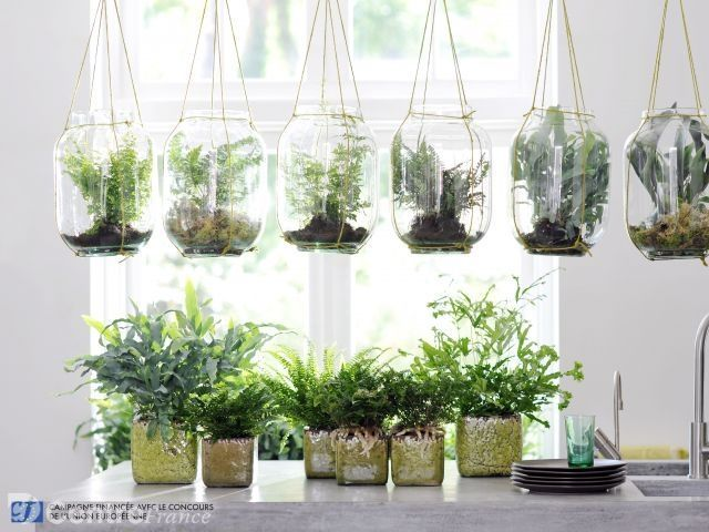 Afficher l 39 image d 39 origine jardin int rieur pinterest for Deco interieur plante