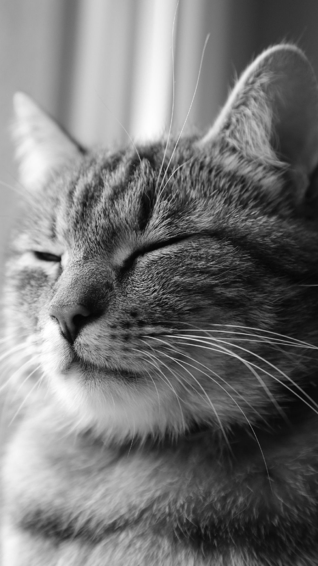 Sleepy Cat Phone Wallpaper Lockscreen Hd 4k Android Ios Iphone