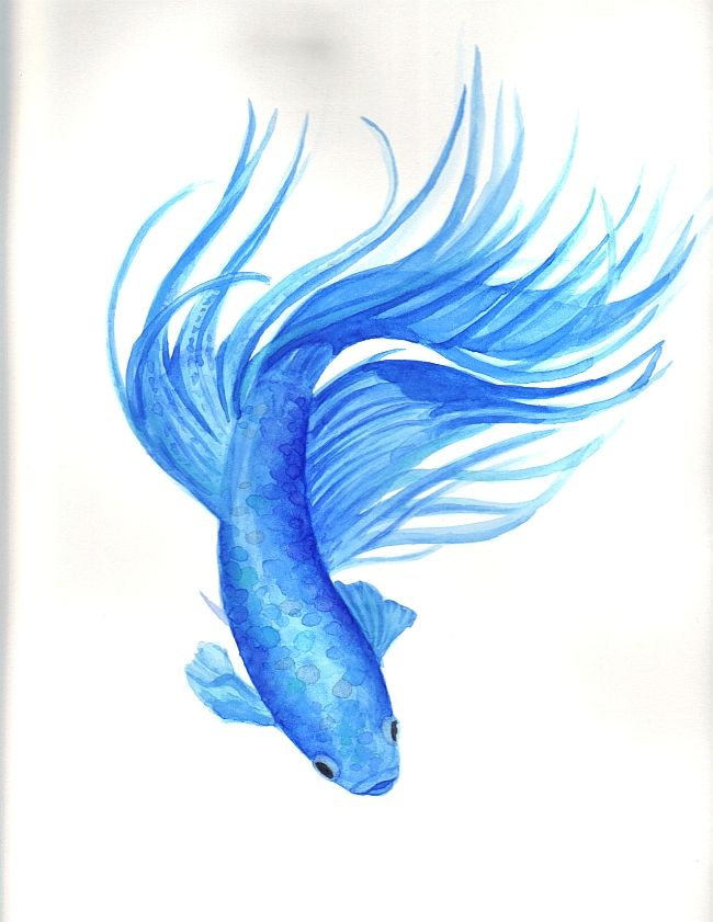 for Betta fish painting