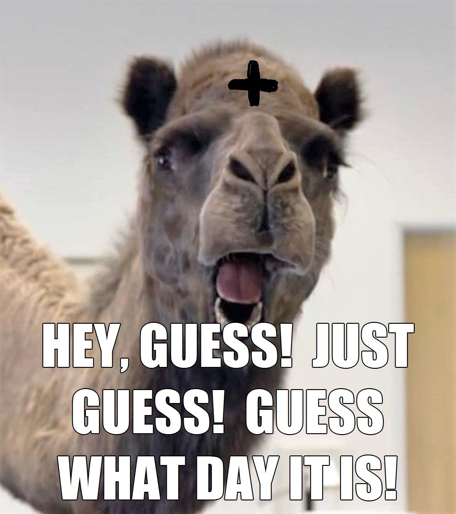Ash Wednesday The First Day Of Lent Catholic Memes Catholic Jokes Catholic Humor