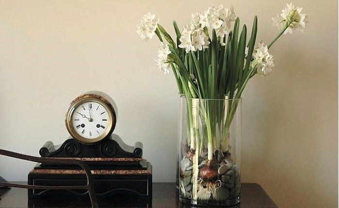 Gardenista: Sourcebook for Cultivated Living. Hints for growing paperwhites.