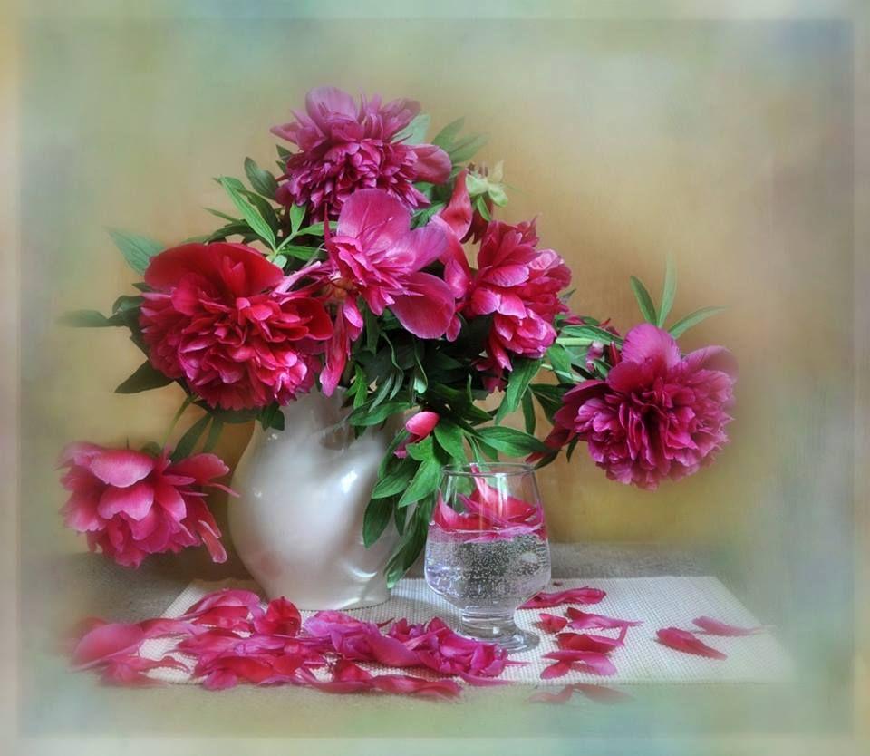 https://www.facebook.com/photo.php?fbid=692178237510015 Pfingstrosen,
