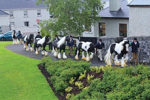 THE 10 BEST Things to Do in Ballinasloe - 2020 (with Photos