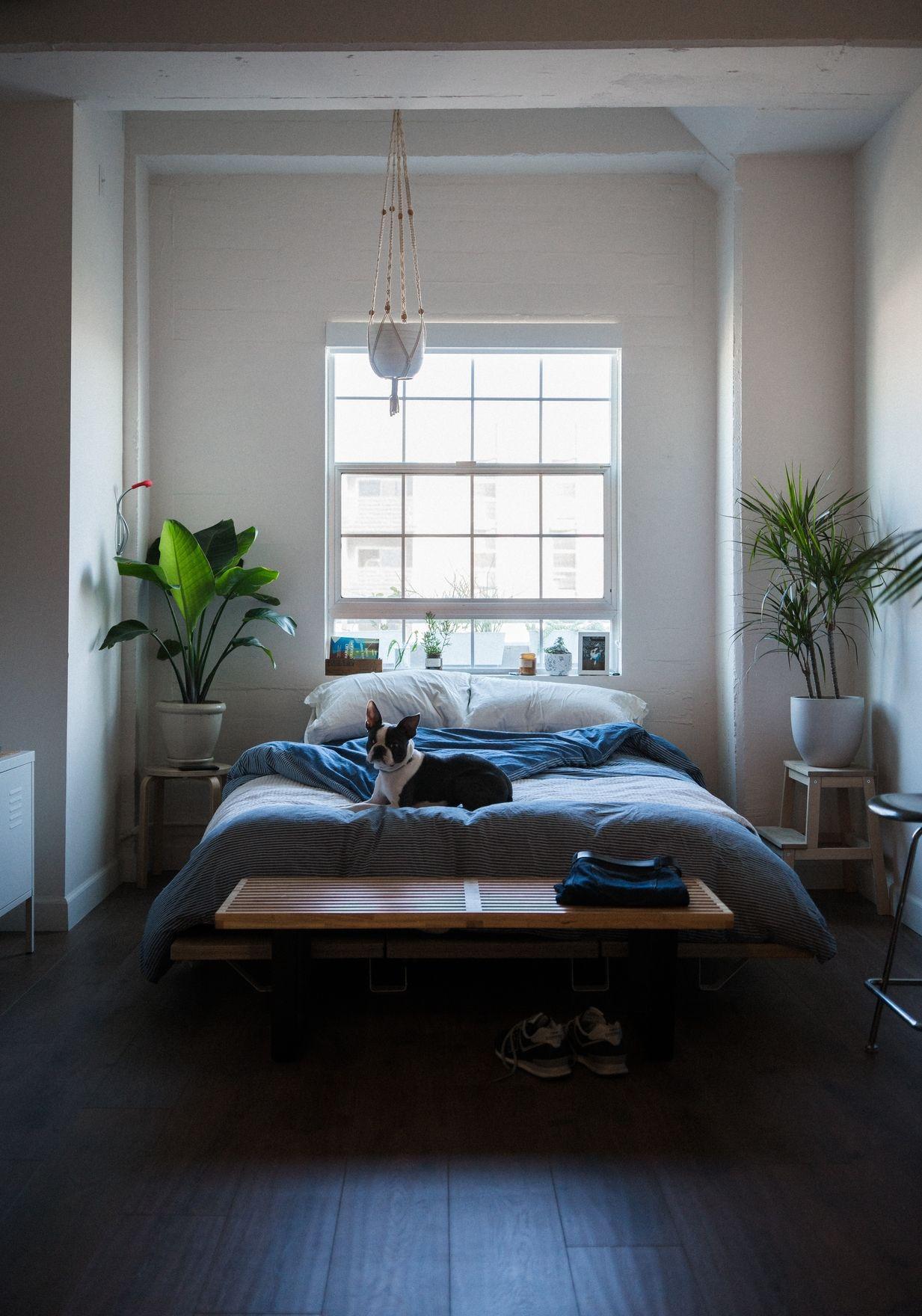 Pflanzen im Schlafzimmer | IDEAS INTERIORES | Schlafzimmer ...