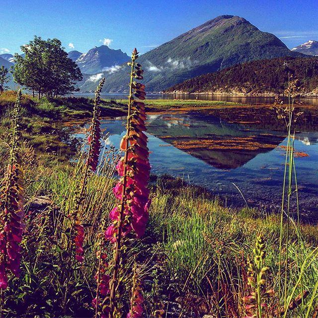 Sommar  Loc: Flå, Ålvundeid, Sunndal