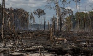 New Disturbance Map Shows Damaging Effects Of Forest Loss In