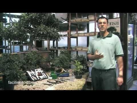 Innovando en el jardín: apuesta por Bonsáis   Plantas