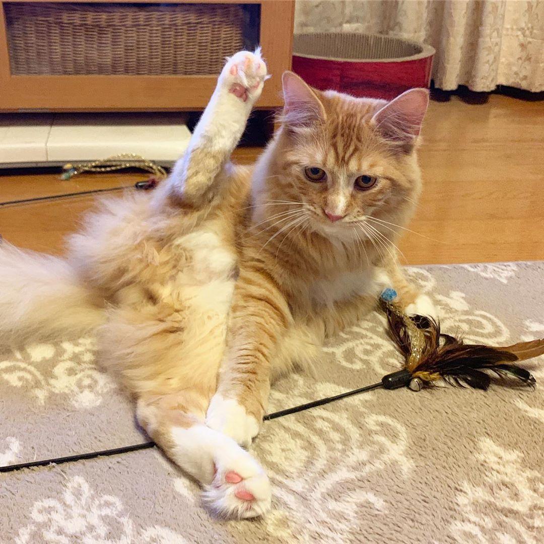 ボード「cat part13」のピン
