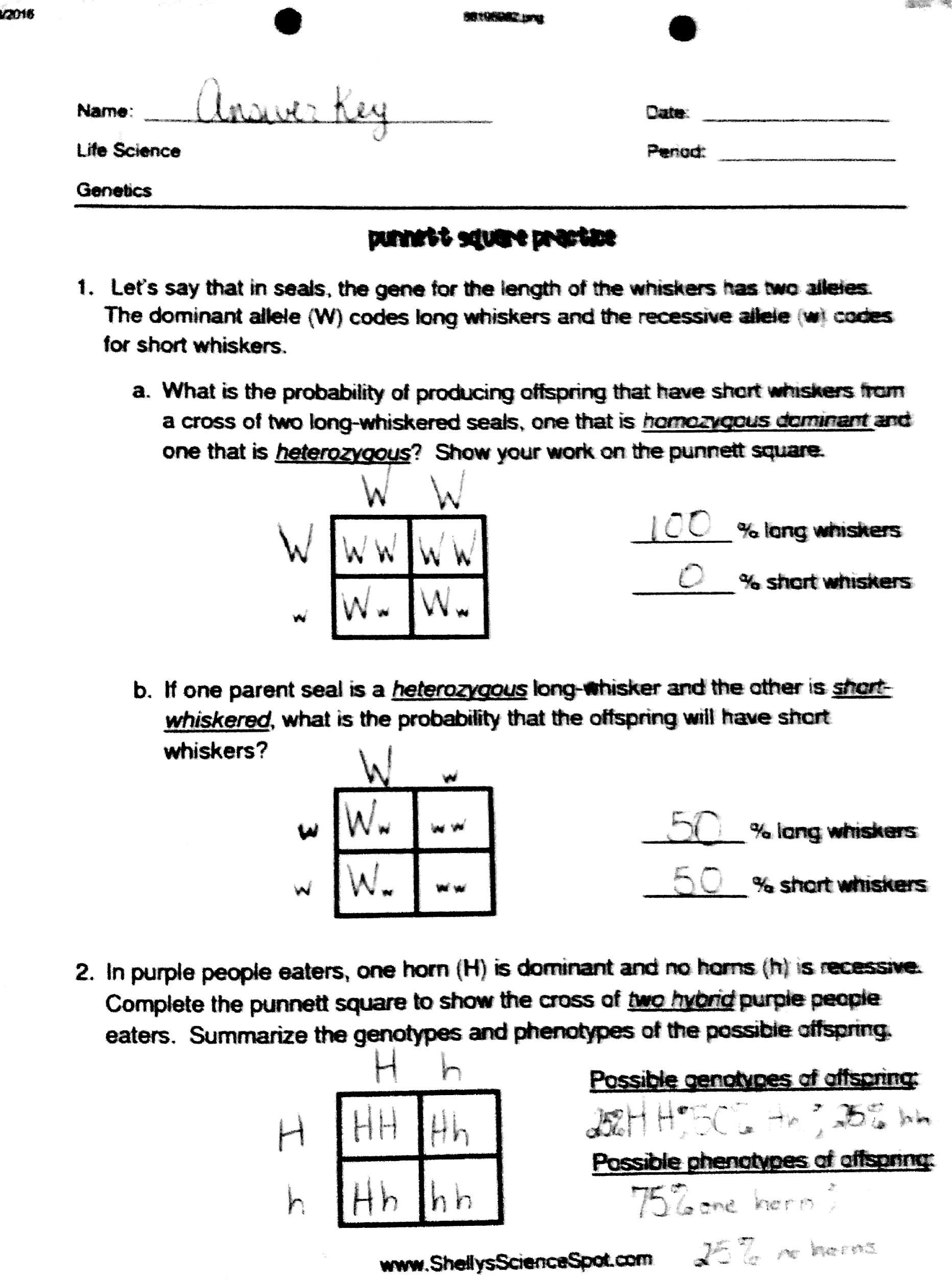 Punnett Square Practice Worksheet In