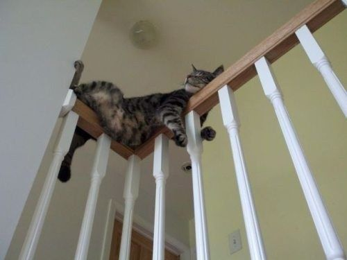 Even the way they relax can be…unusual. | What's The Weirdest Thing Your Cat Does?