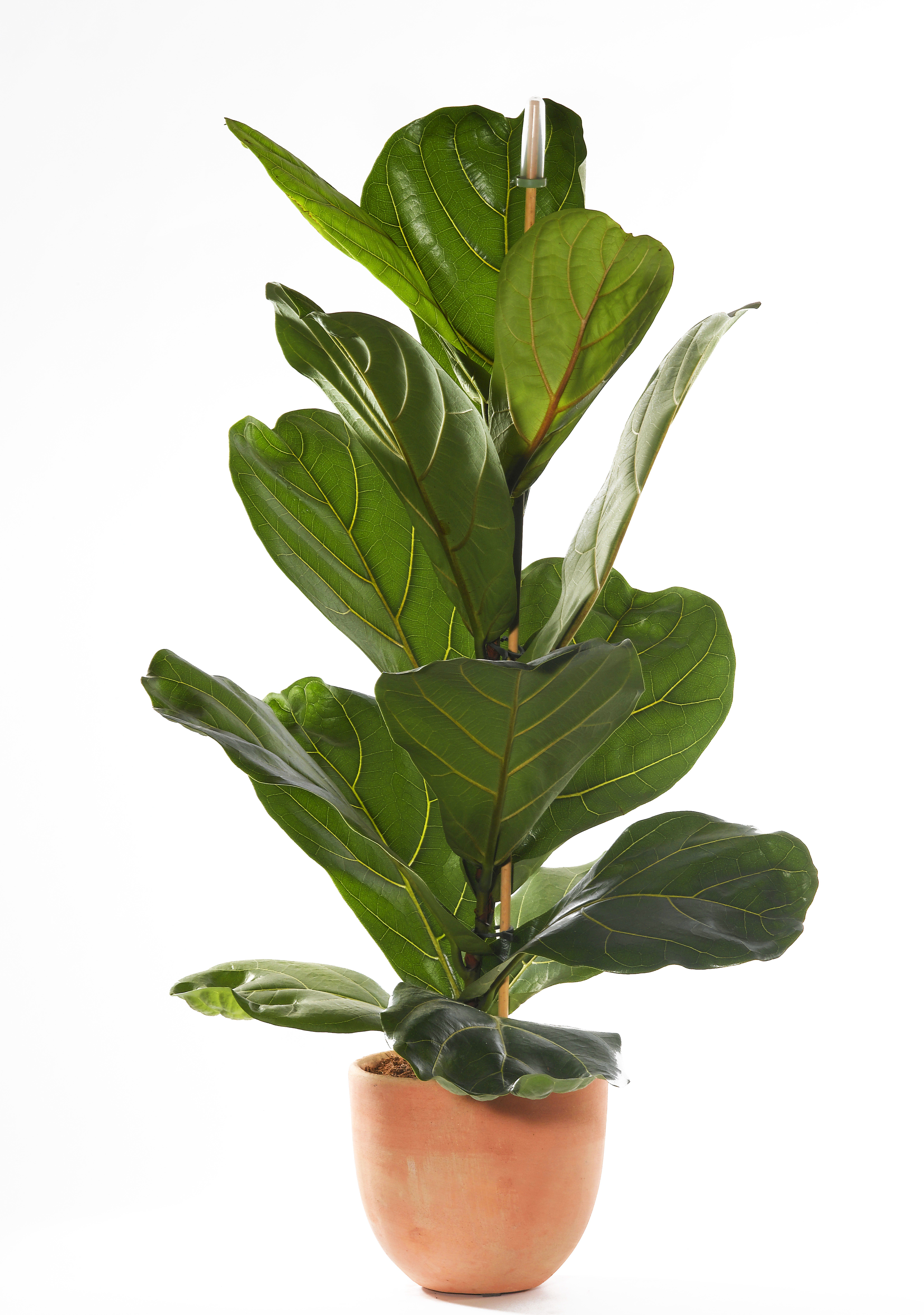 The Best Indoor House Plants And How To Buy Them For The
