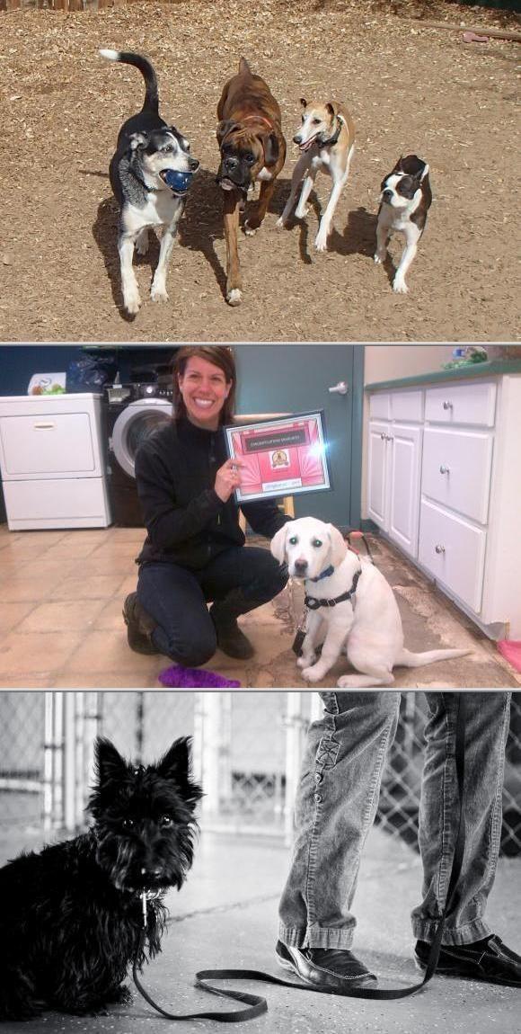 Noble Beast Dog Training Is One Of The Best Dog Agility Training