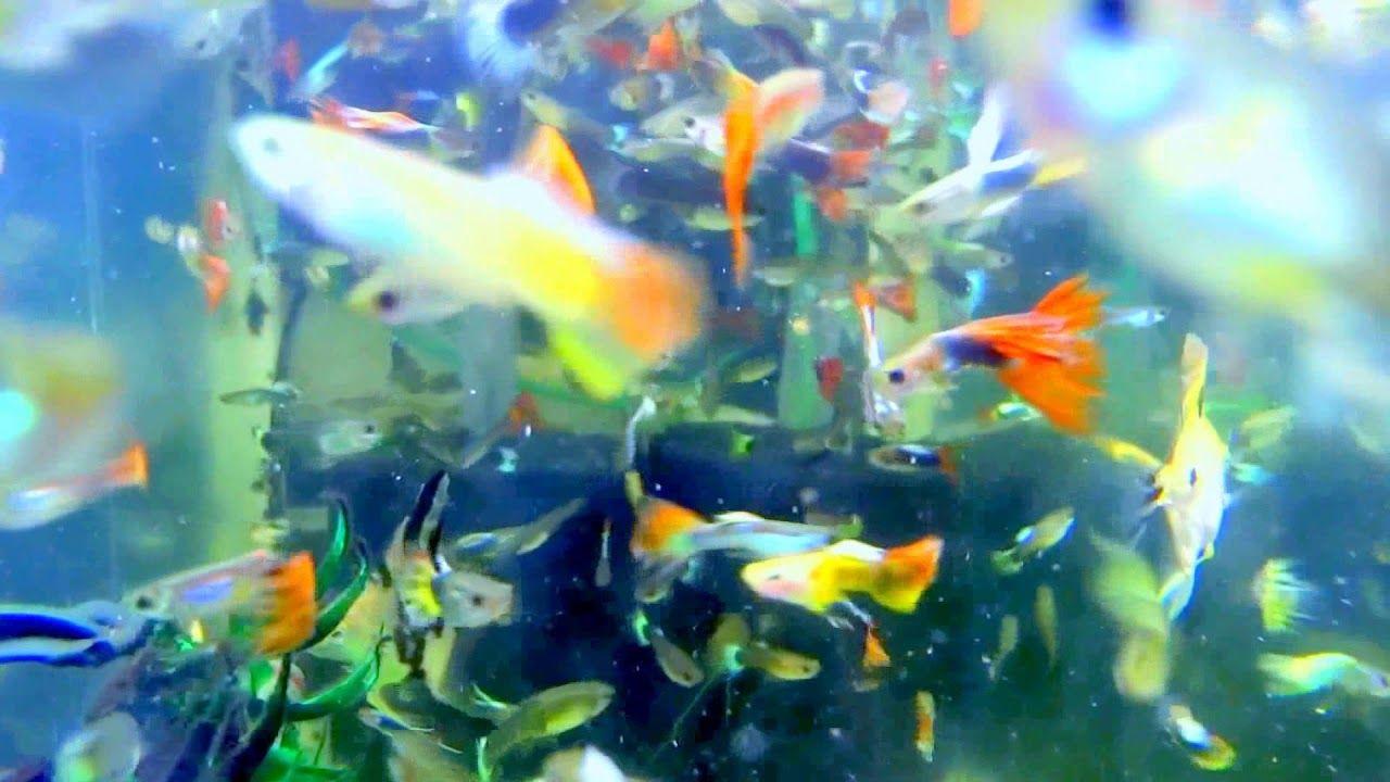 Pin On Fish Tank Fishing