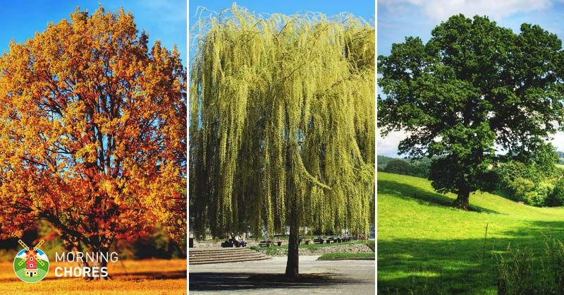 34 Fast Growing Shade Trees That Are Summer Approved 640 x 480