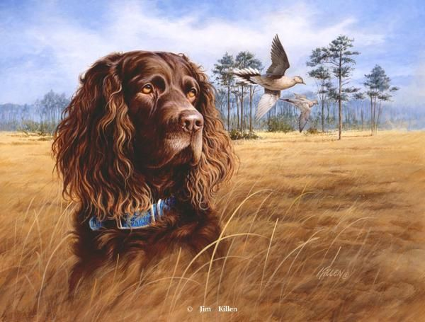 Boykin, Brittany and Springer Spaniels Painted by Jim Killen 2