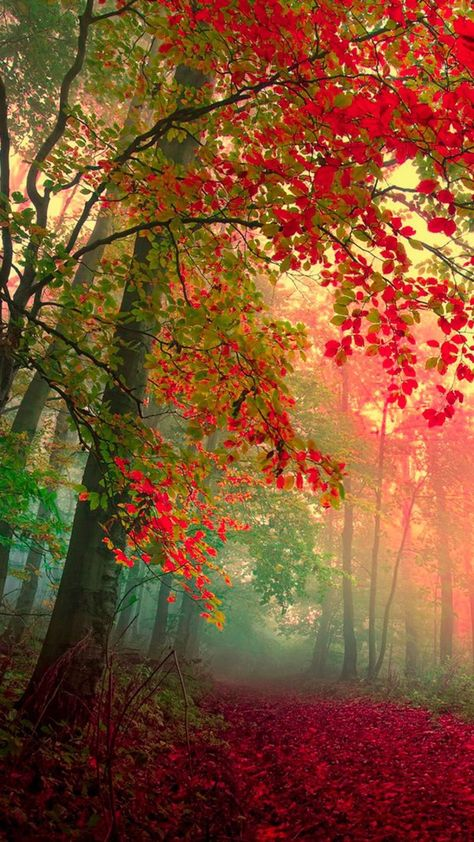 Email Microsoft Com Team Outlook Beautiful Nature Autumn Scenery Autumn Landscape