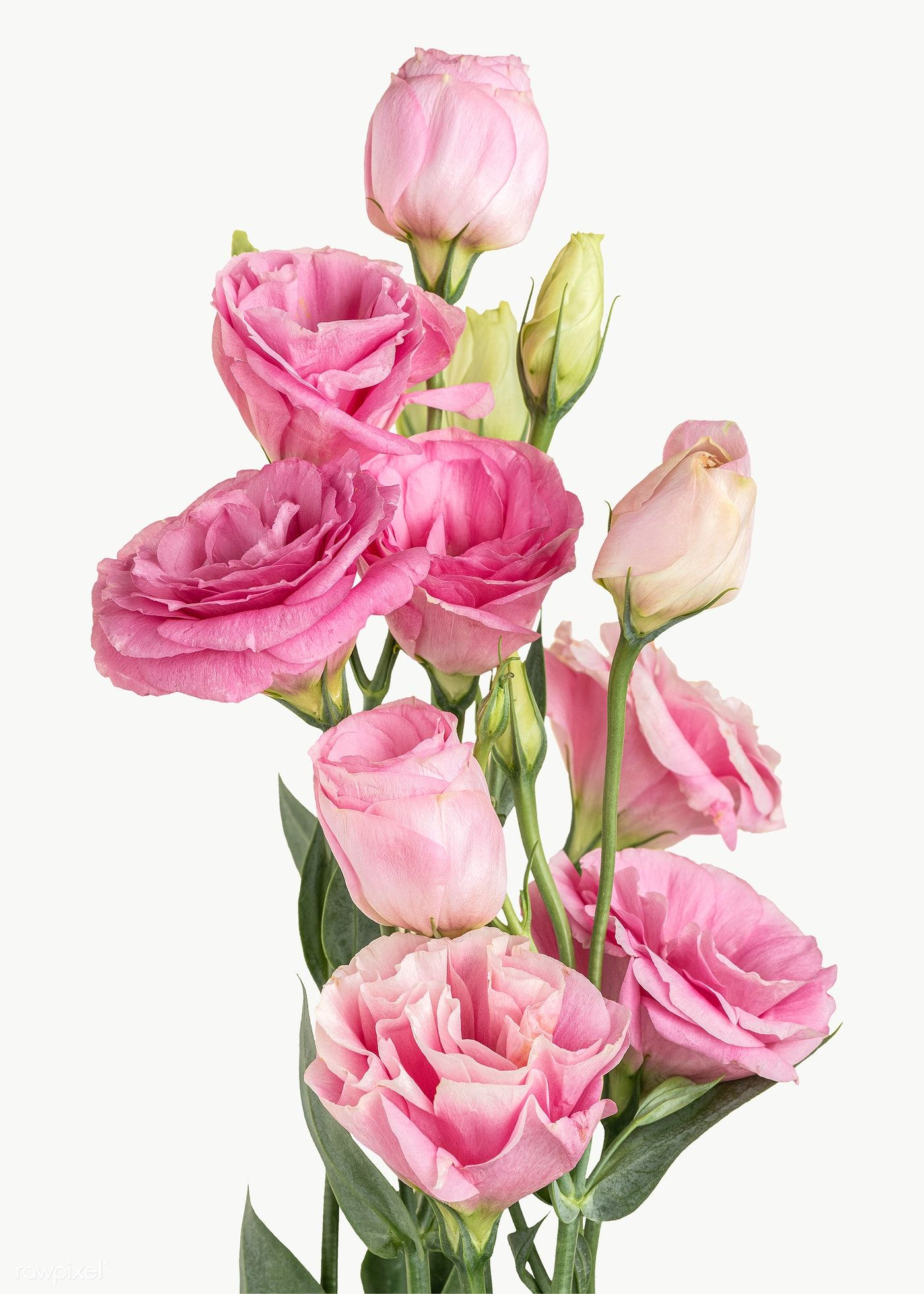 Bouquet Of Pink Lisianthus Flower Element Transparent Png Free Image By Rawpixel Com Jira In 2020 Delphinium Flowers Flowers White Lily Flower