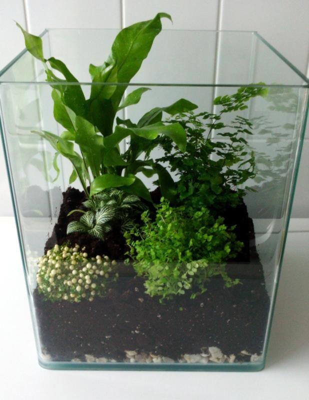 comment fabriquer un terrarium avec un nano aquarium. Black Bedroom Furniture Sets. Home Design Ideas