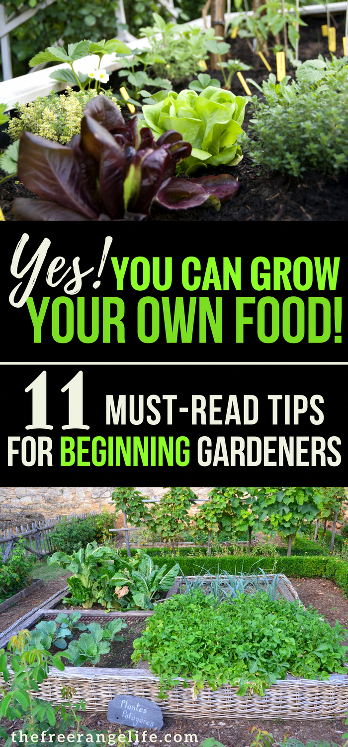 Gardening For Beginners If You Are New To Vegetable Read These 11 Tips And Grow The Best Backyard Garden Backyardgarden