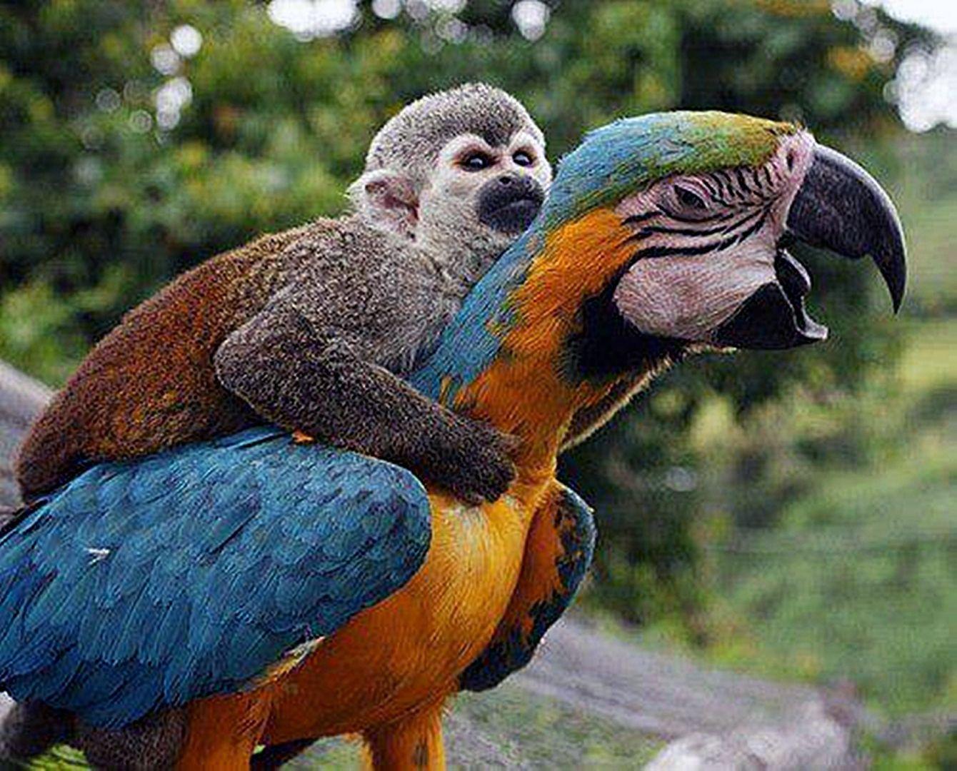 A Monkey On My Back Literally Funny Parrots Funny