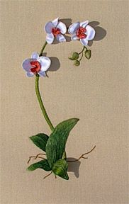 Image detail for -Luan B. Callery Moth Orchid - A Stumpwork Embroidery