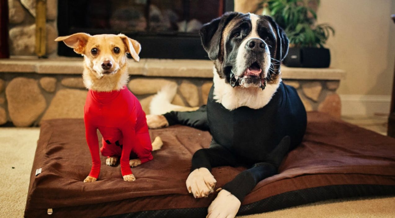 Frustrated Dog Owner Invents Doggy Leotards And We Can T Stop Laughing Anxious Dog Dog Activities Dogs
