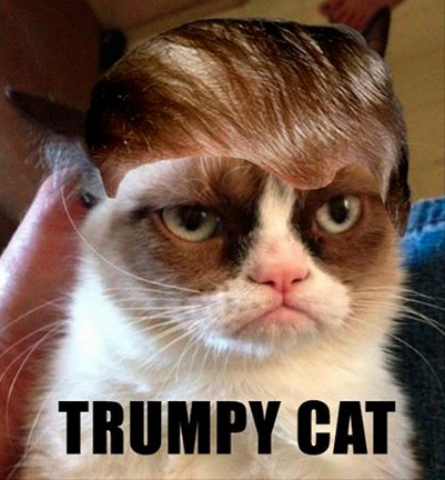 Donald Trump Cats Google Search Things I Want To Do Grumpy Cat
