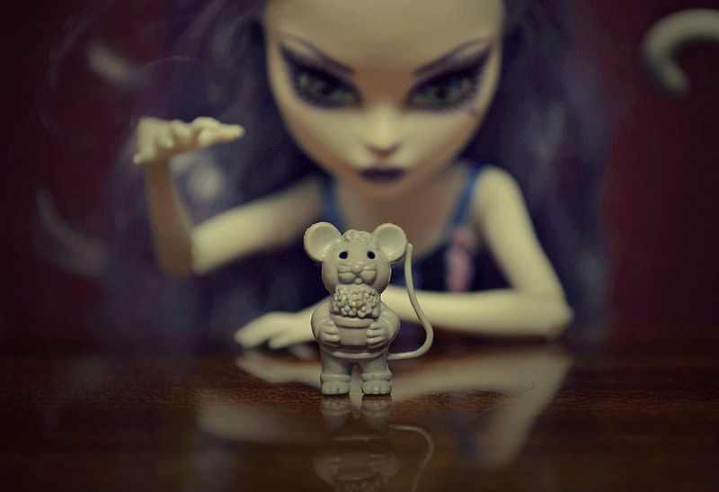 Demise of a Mice | Flickr - Photo Sharing!