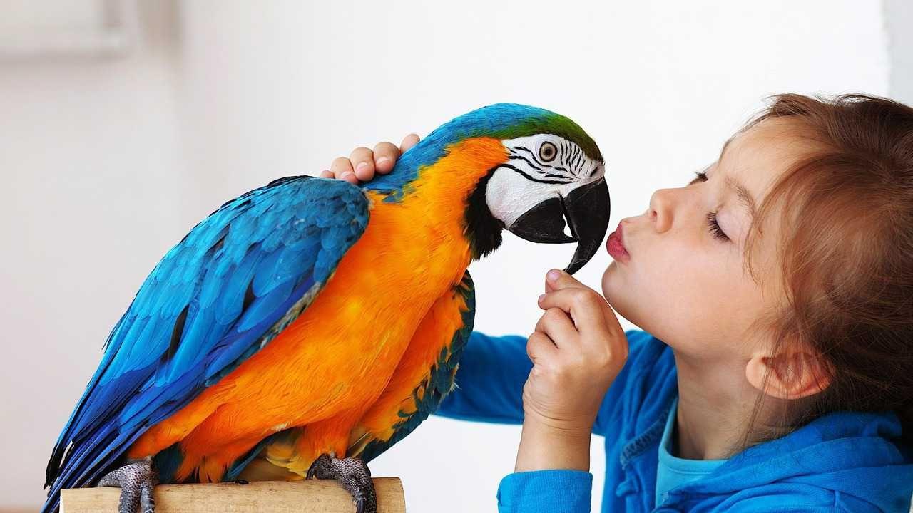 Best Pet Birds For A Beginner Pet Birds Best Pet Birds Animals