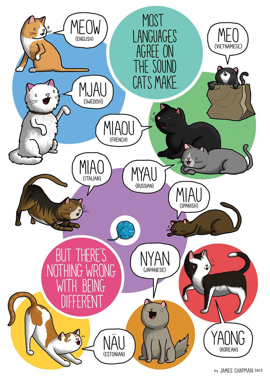 The Sound A Cat Makes In Different Languages