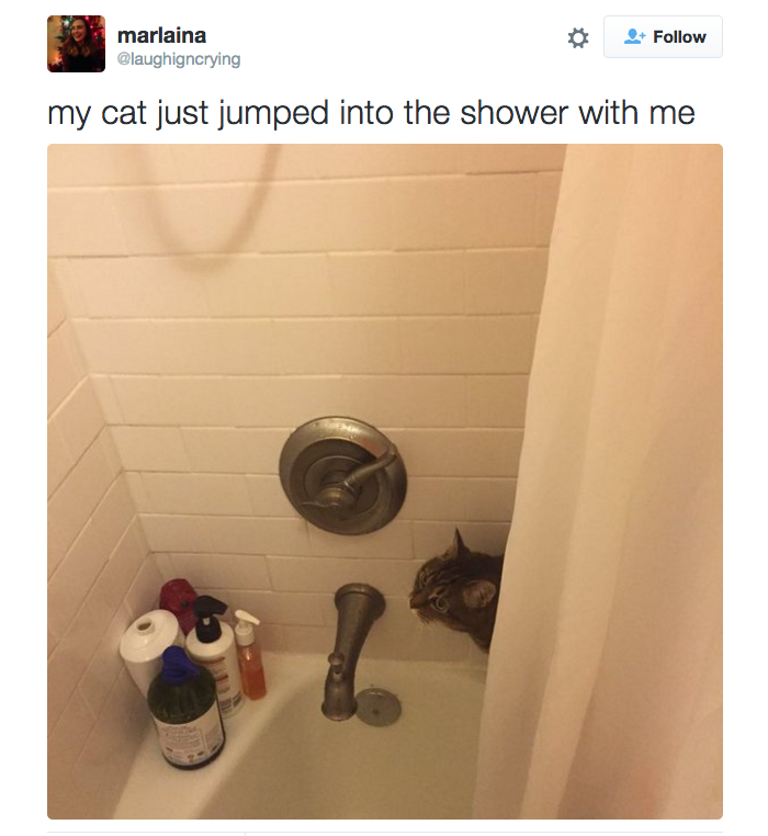 22 Struggles Everyone Who Lives With A Cat Knows Too Well