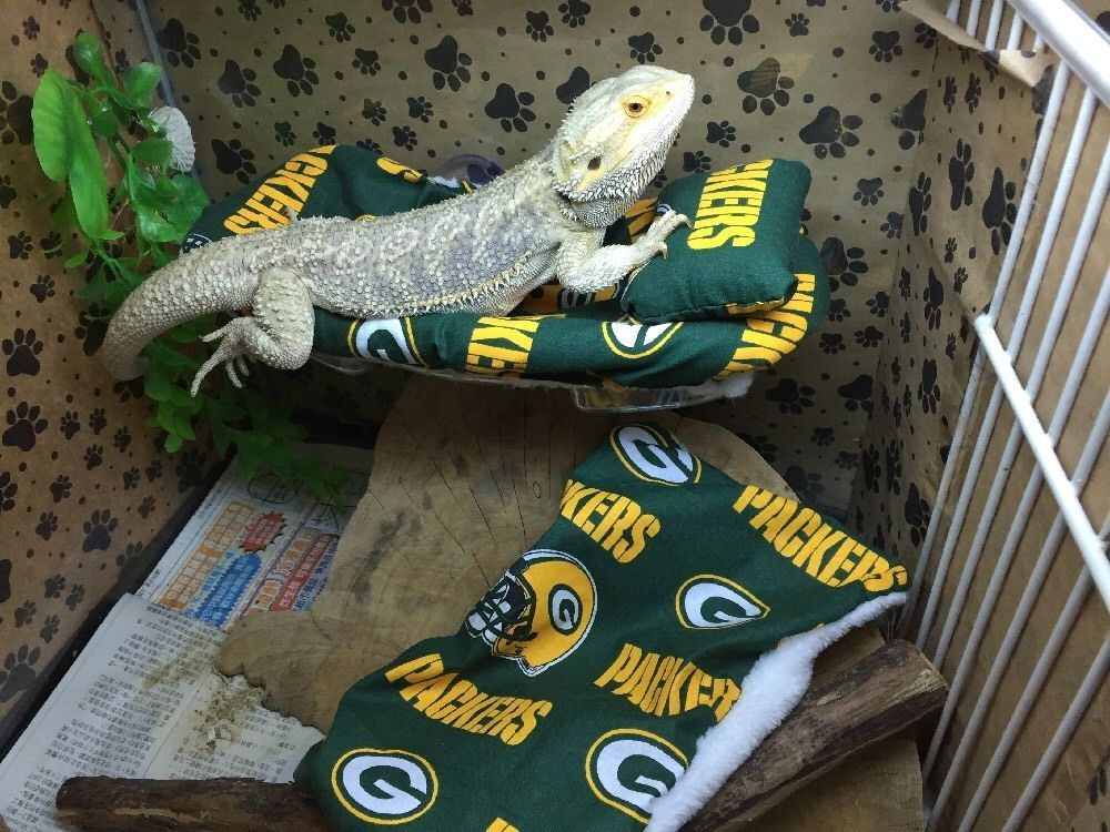 BEARDED DRAGON LRG ATTACHABLE RESTING BED NFL GREEN BAY PACKERS PRINT SET COVERS  | eBay