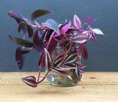 Grow Beautiful Indoor Plants In Water