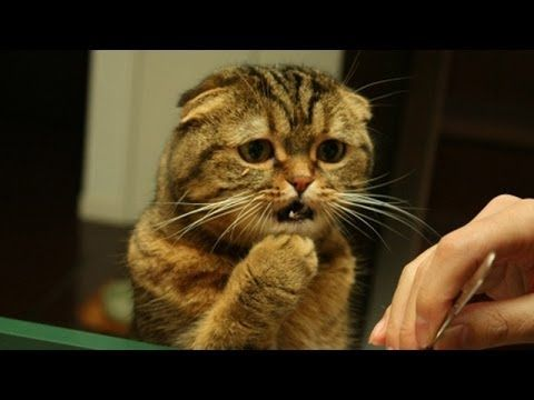 Cute cats feel confused Funny cat compilation YouTube