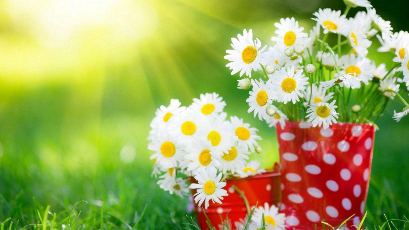 Most beautiful white flowers free hd wallpapers elsoar hd most beautiful white flowers free hd wallpapers elsoar izmirmasajfo