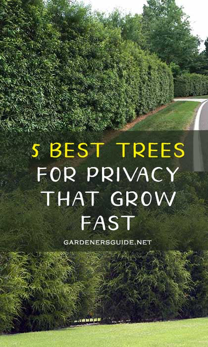Pin By Sharon Riedl On Garden Best Trees For Privacy Privacy