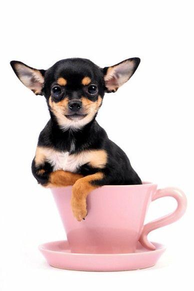 Black Friday 2016 Audio Deals Cute Teacup Puppies Dog Friends
