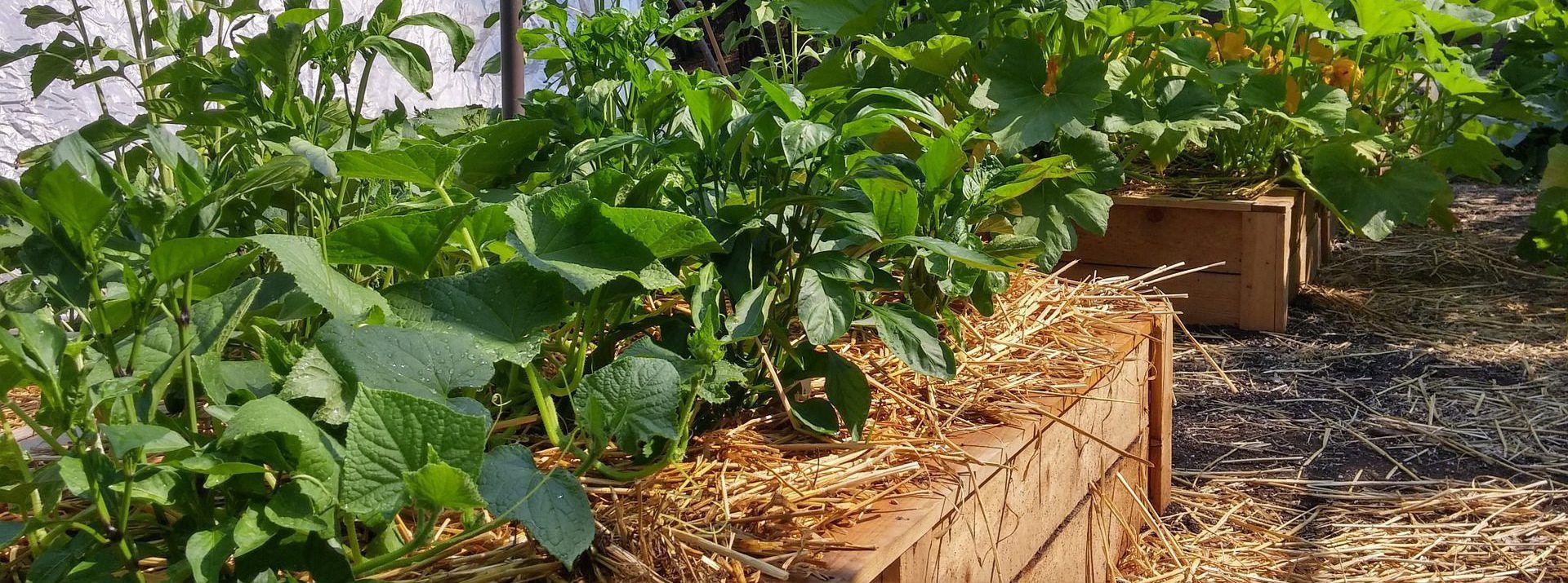 Épinglé par Mes Légumes du Jardin sur Jardinage Astuces
