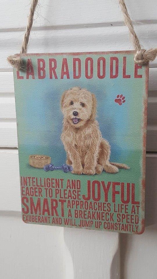 LABRADOODLE DOG MINI METAL CHIC N SHABBY VINTAGE RETRO