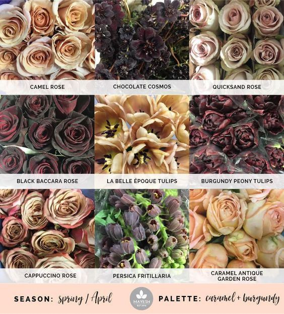 I Love These Flowers And Colors For My Bouquet Wedding Flowers Burgundy Flowers Types Of Flowers
