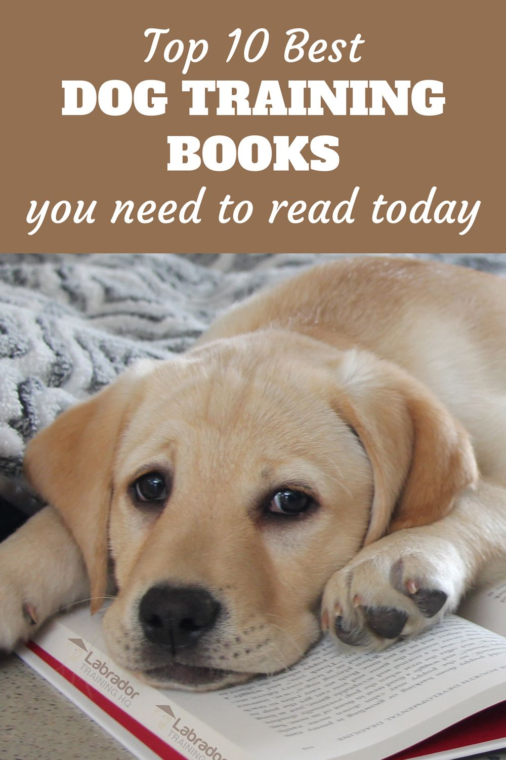 Top 10 Best Dog Training Books You Need To Read Today Best Dog Training Books Best Dog Training Dog Training Books