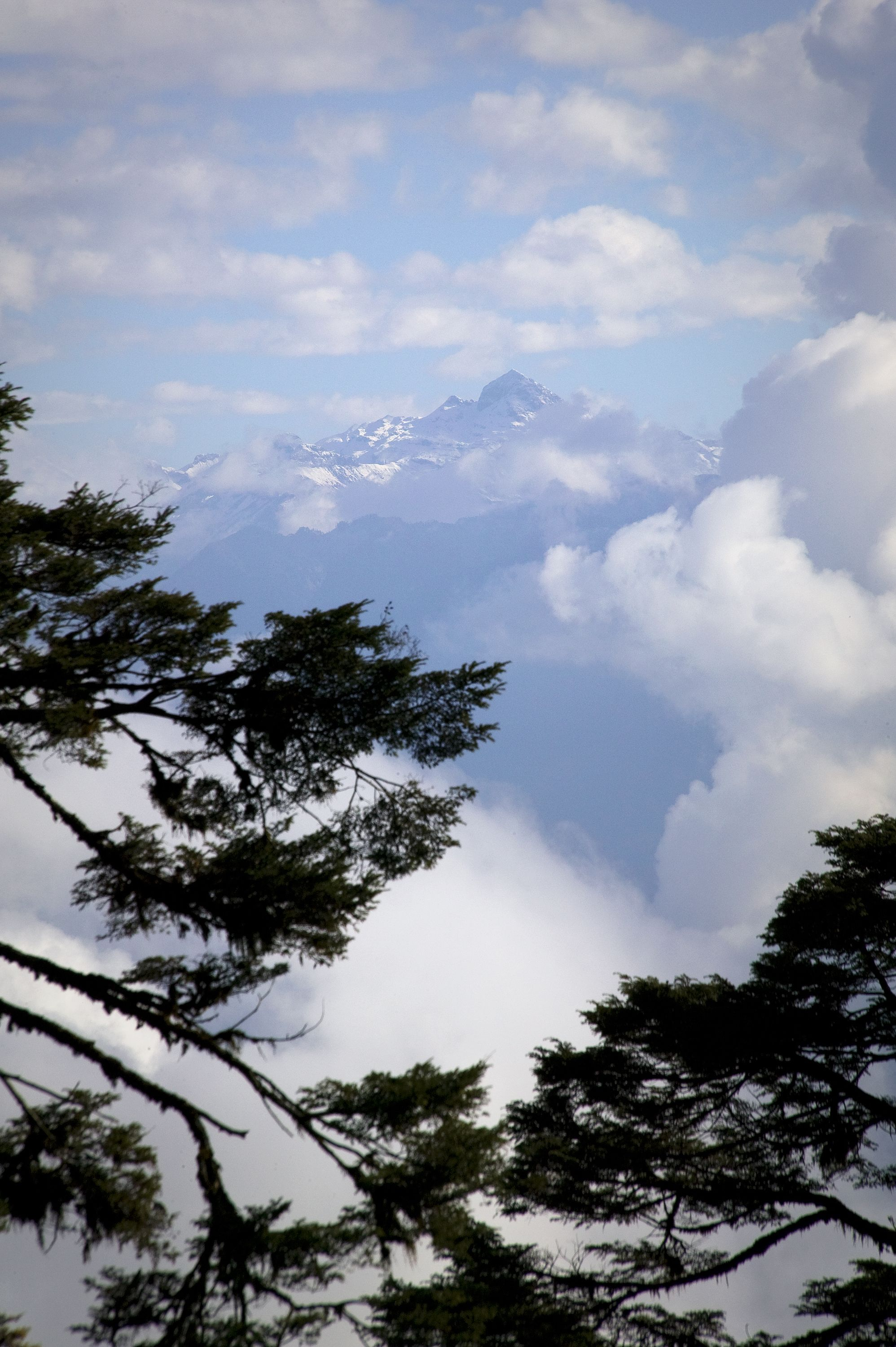 Cloudy Mountain Pines