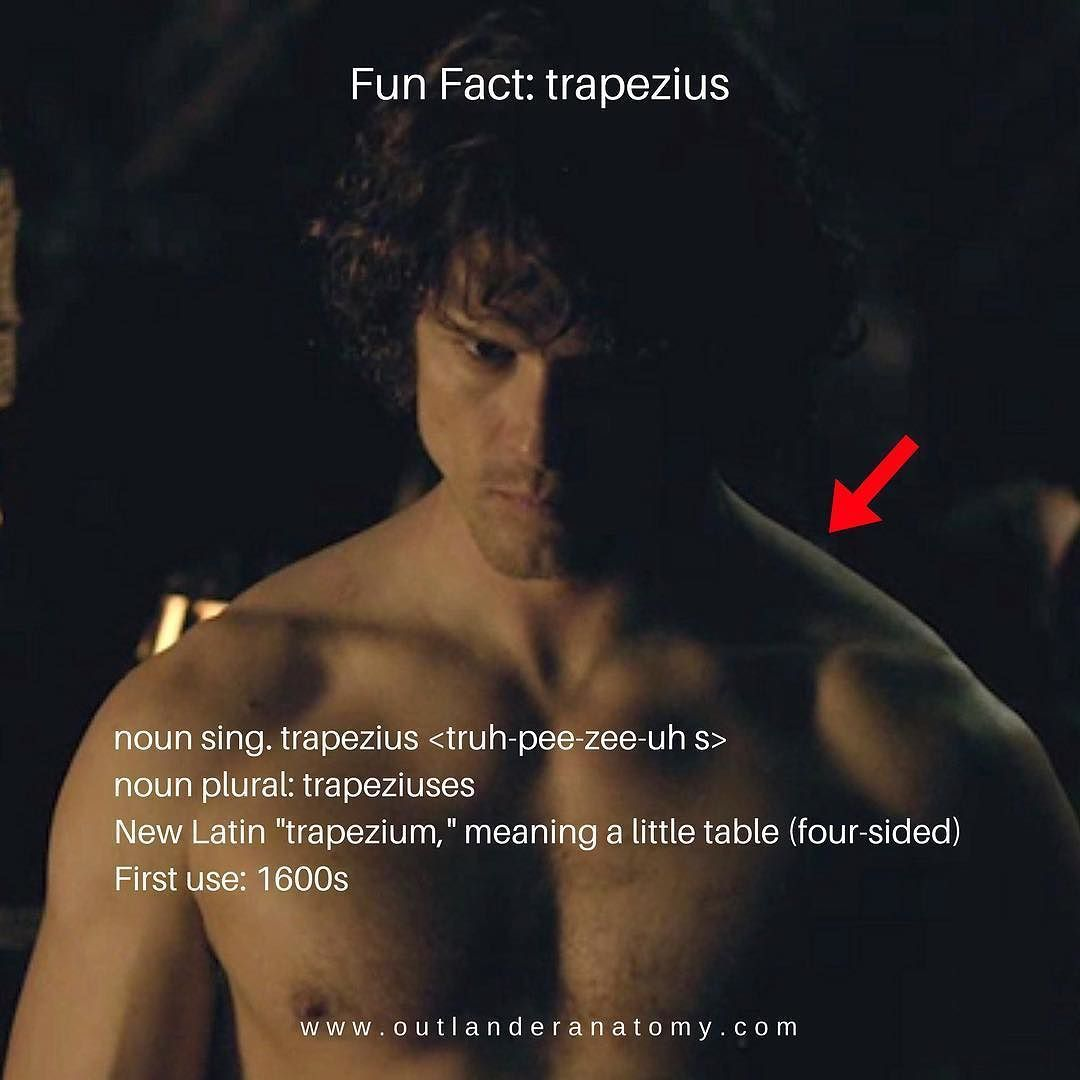 Fun Fact: trapezius Anatomy Def: Broad, flat muscles on each side of ...