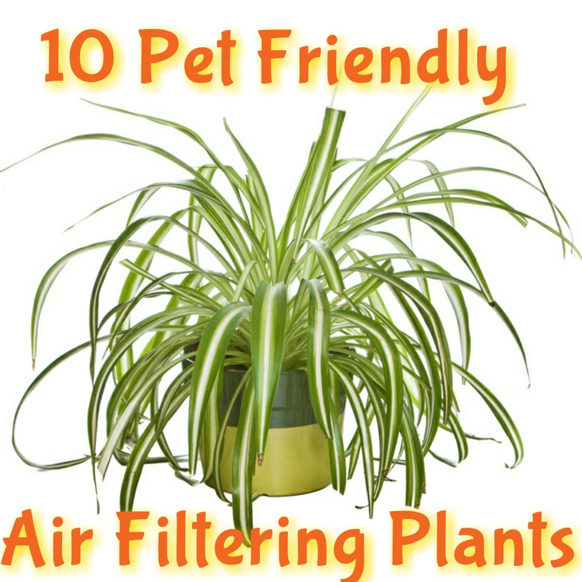 10 Kid Pet Friendly Air Filtering Plants Air Filtering Plants