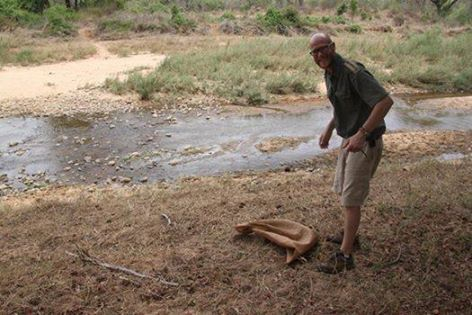 Meet River Lodges's Head Guide, Gus, doing his good deed of the day by releasing this python on the reserve.