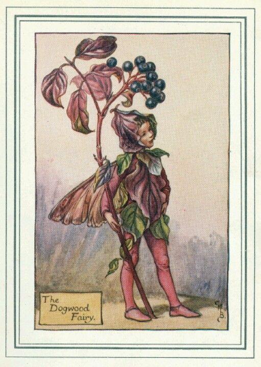 The Dogwood Fairy, by (CMB) Cicely Mary Barker