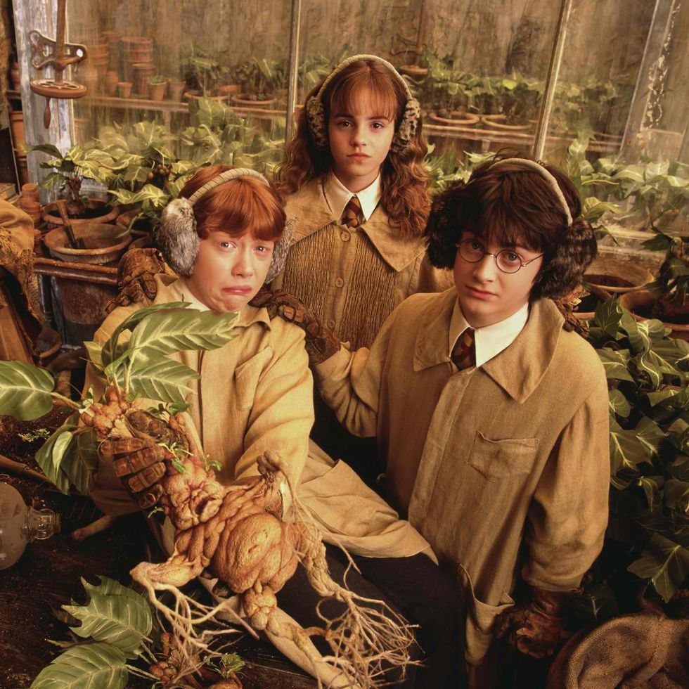 Exclusive: Warwick Davis reveals how Harry Potter stars avoided giving out spoilers