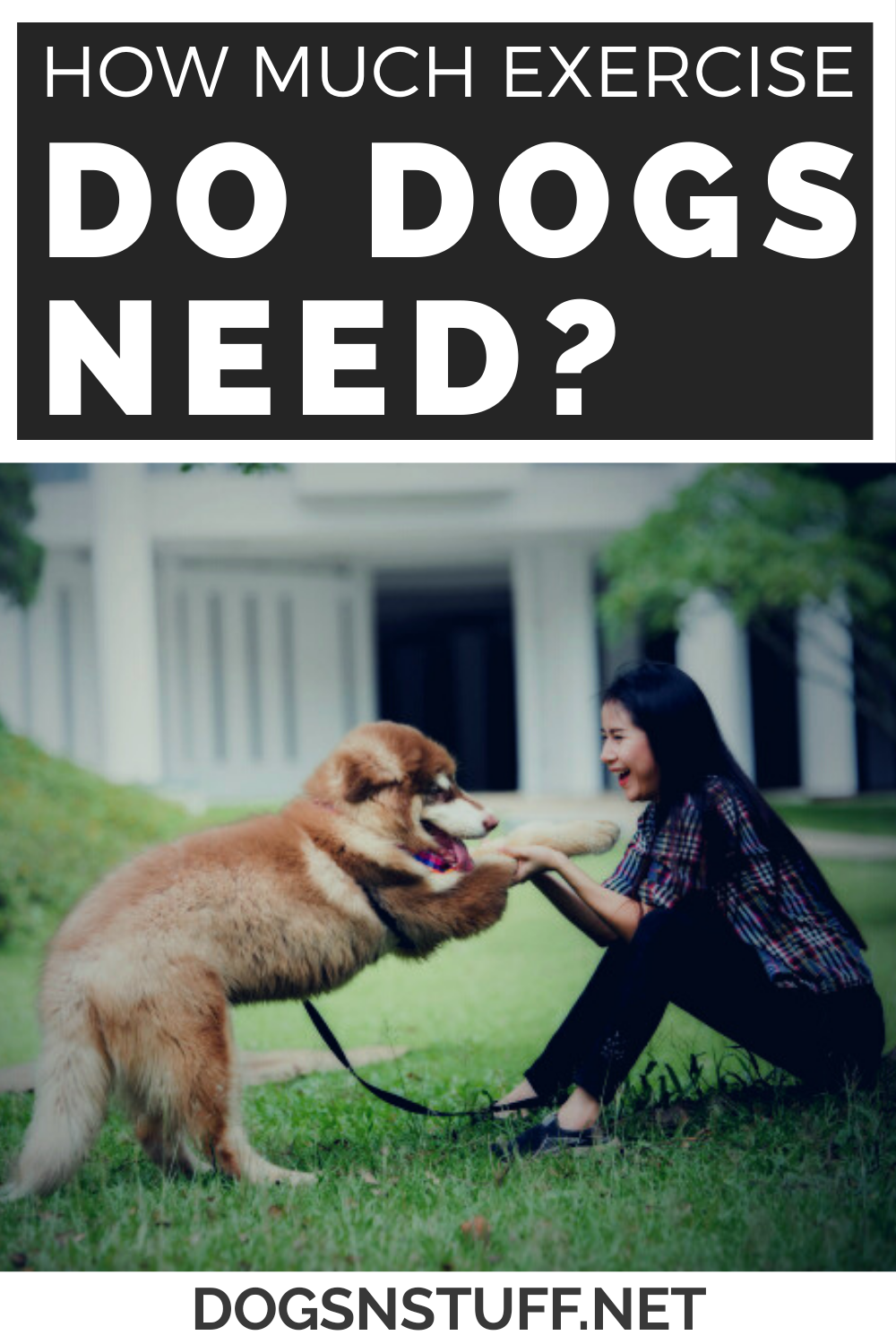 How Much Exercise Does a Dog Need Every Day in 2020 (With