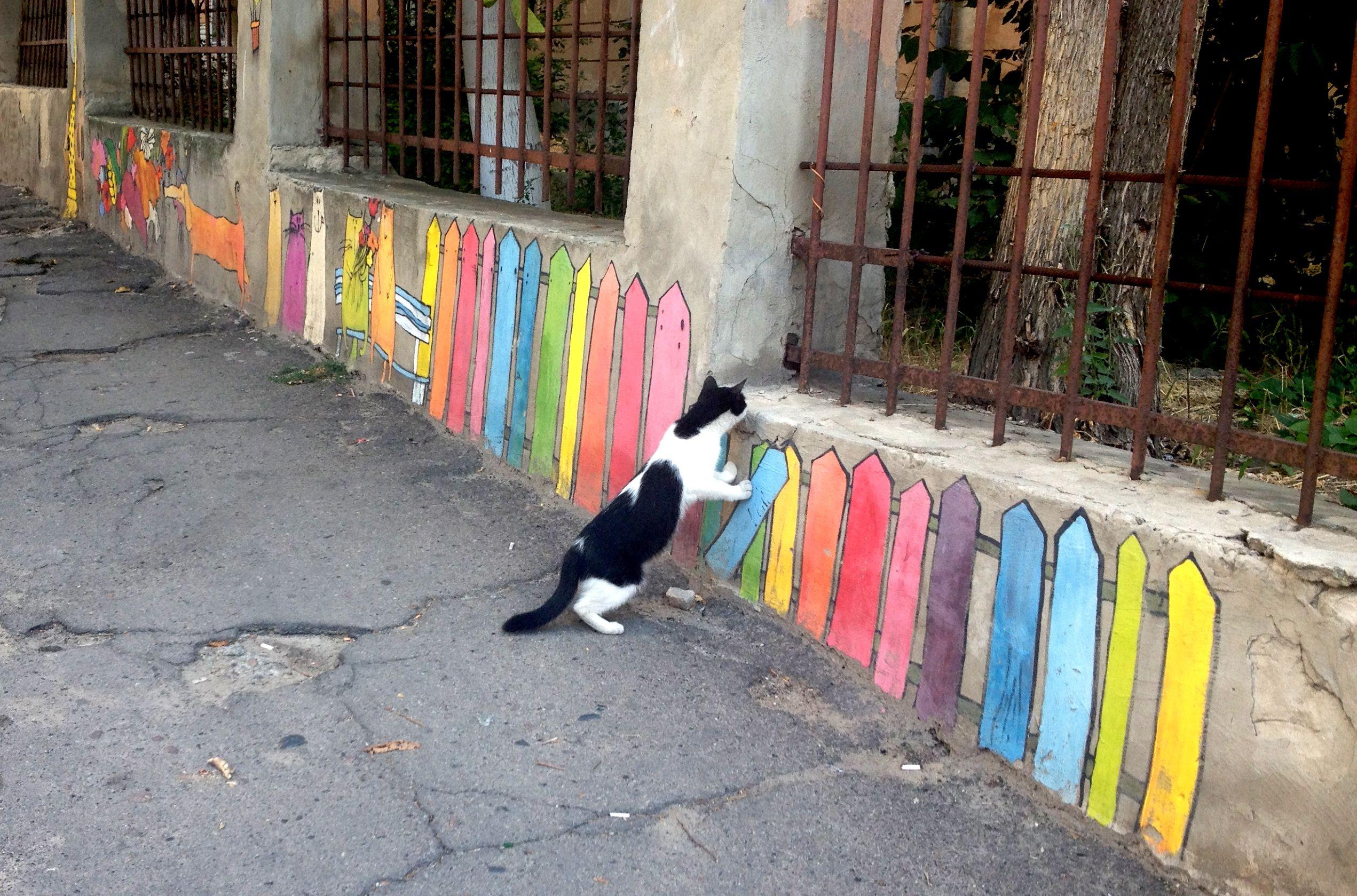 Кот Херсона.Kherson. Ukraine. Tourism. South. Cat. Cats. Courtyard. City. Animals.