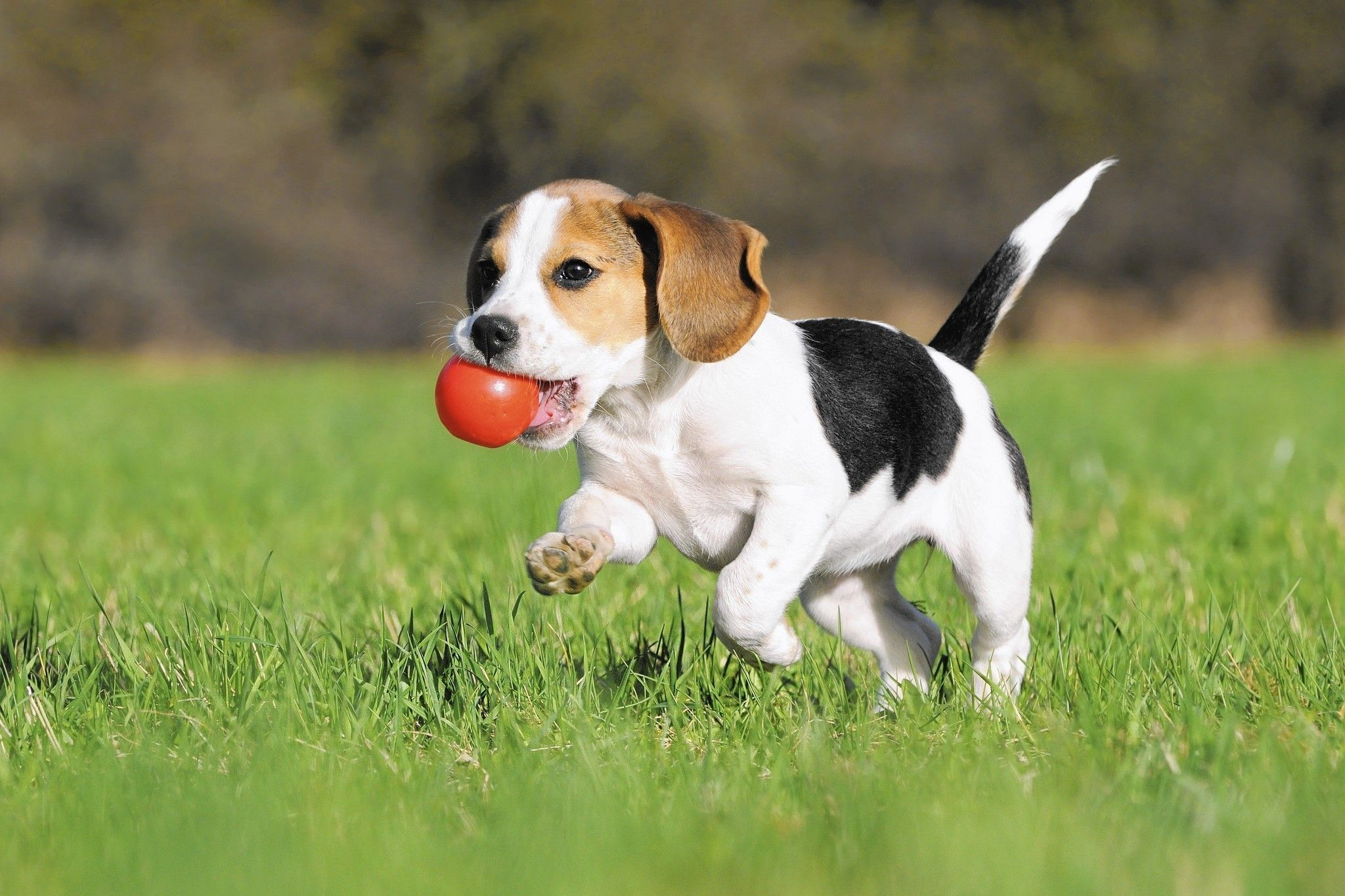 Gardening With Fido And Fluffy Can Be Doable And Downright Delightful Beagle Puppy Stinky Dog Puppy Training